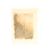 Natural Bodhi Leaf Card